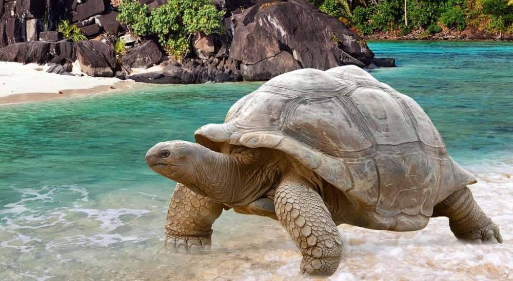 Сейшельские острова - seychelles - qwe.wiki