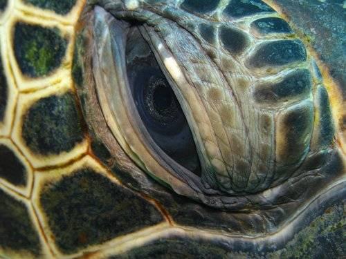 Внутренности черепахи