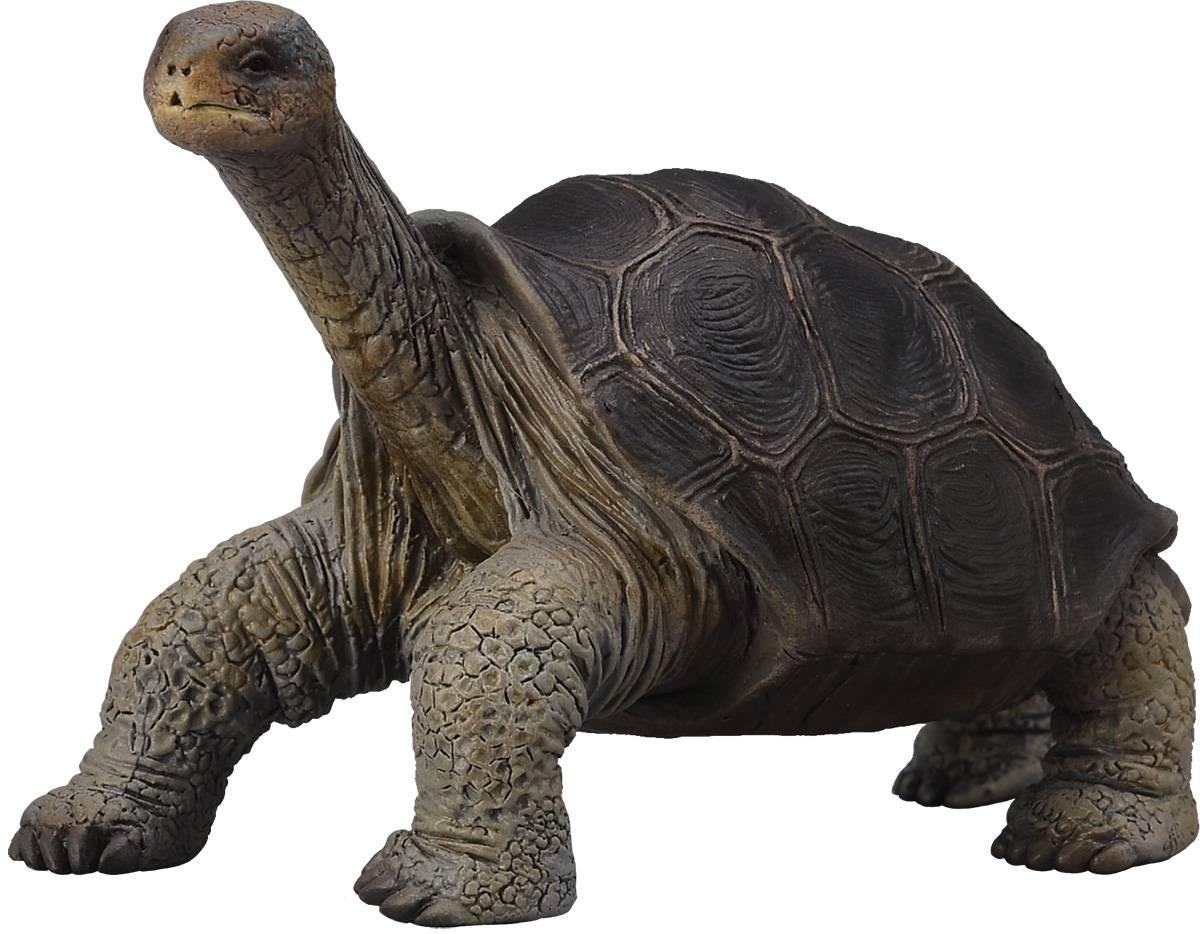 Слоновая черепаха википедия