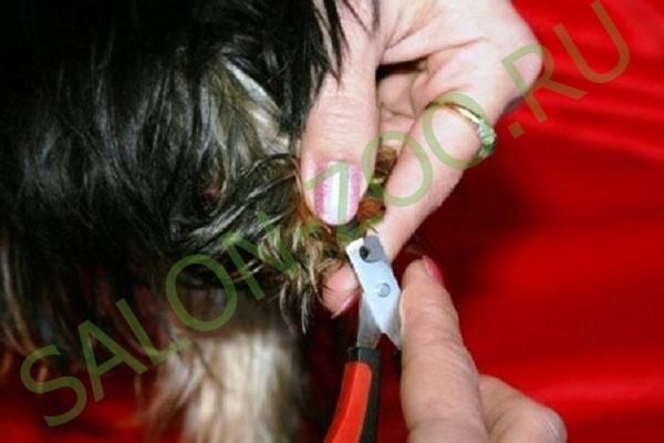 Как подстричь хорьку когти