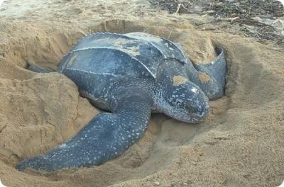 Как ухаживать за черепахой в домашних условиях: уход, правильное содержание, что нужно дома, чем кормить, вода, фото