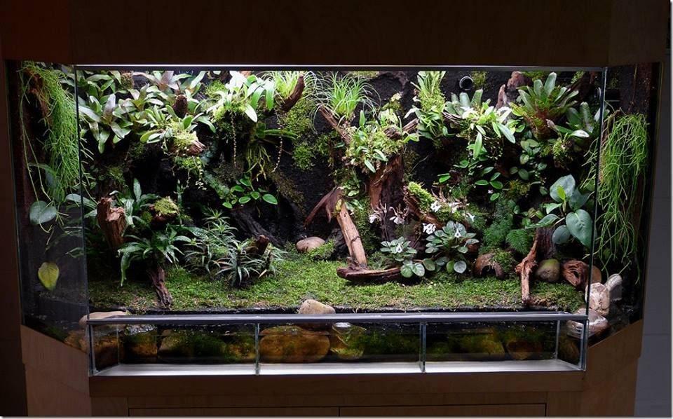 Террариумы для растений, или флорариумы