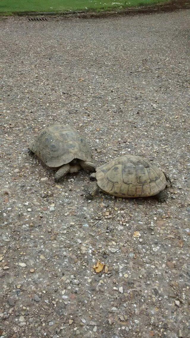 Потерялась черепаха, как найти любимого питомца