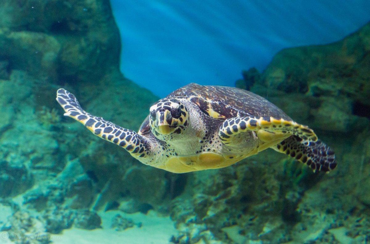 Морские черепахи - origins.org.ua