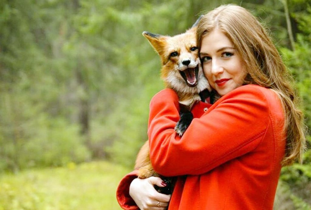 Домашняя лиса: содержание, кормление, прогулки