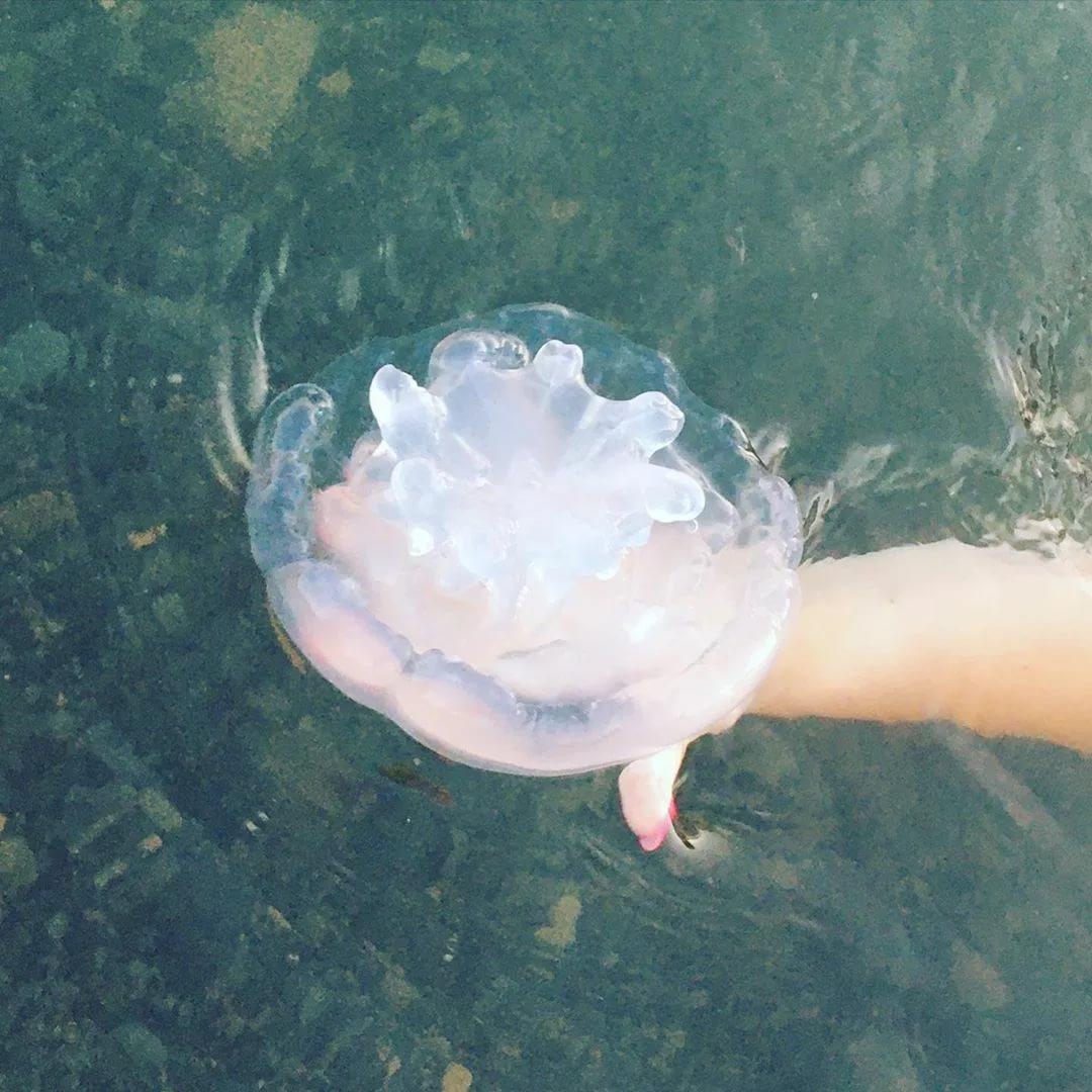 Медузы Черного моря