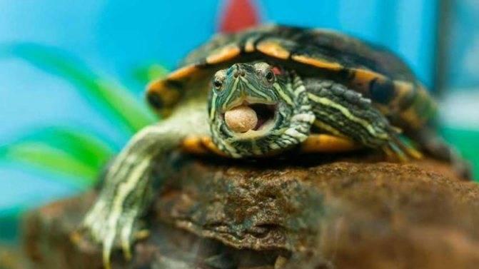 Стоит ли ребенку дарить черепаху?