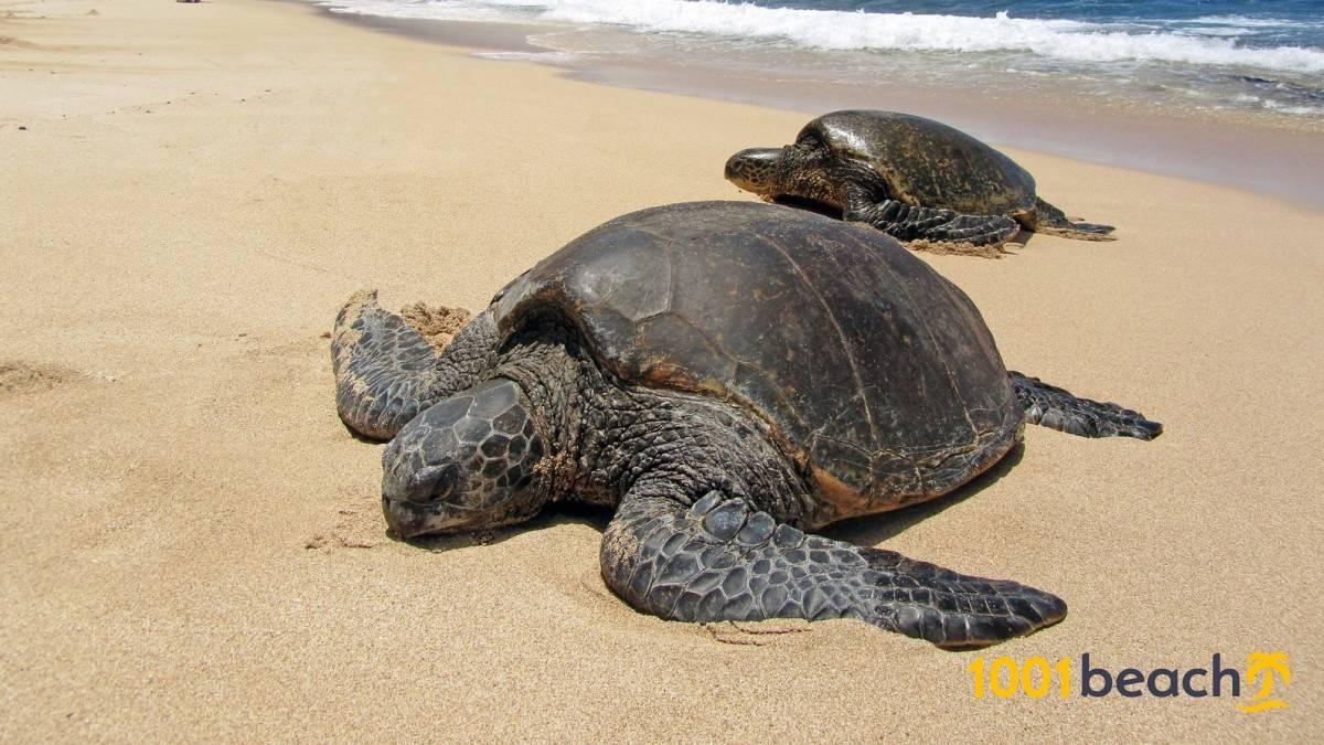 Черепаший пляж алагади (alagadi beach)
