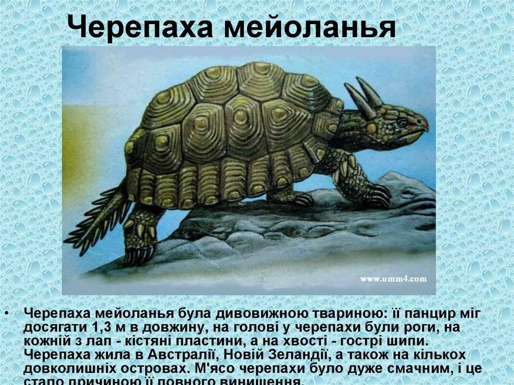 Palaeos vertebrates: chelonii: meiolaniidae and related chelonians
