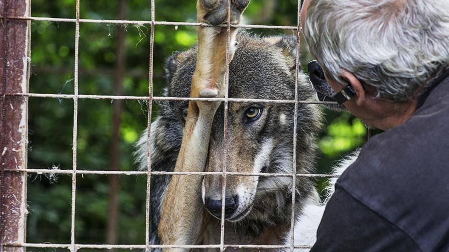«каждый раз, когда мы поступаем неэтично, мы немного себя убиваем»: как решают проблему бездомных животных за рубежом и в россии — такие дела