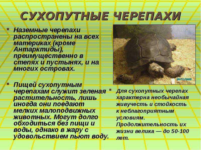 Рацион сухопутных черепах