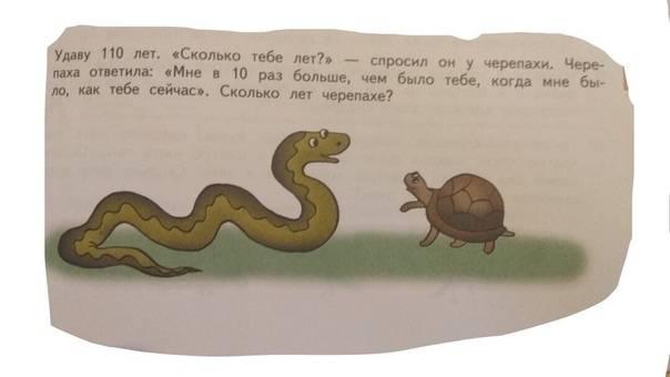 Загадки про черепаху для детей разного возраста