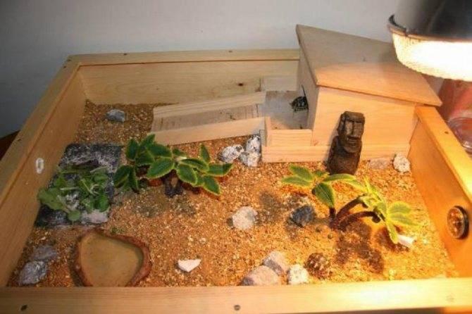 Как обустроить террариум для сухопутной черепахи
