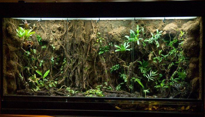 Террариум для ящерицы | мои домашние питомцы