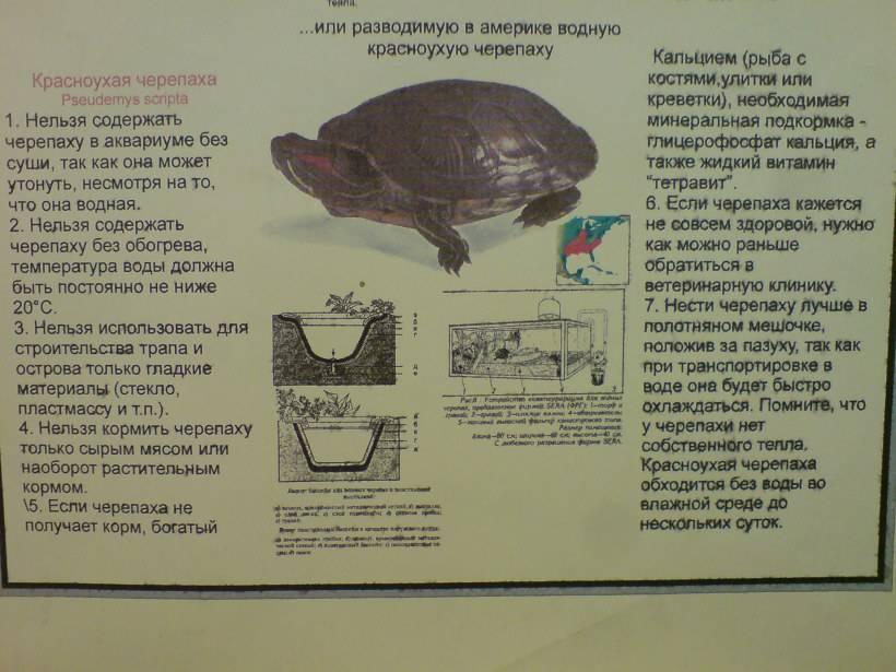 Черепаха — официальная minecraft wiki