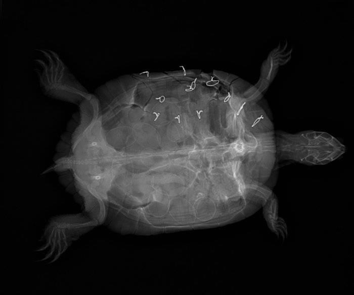 Рентген черепа: что показывает, подготовка к процедуре | food and health