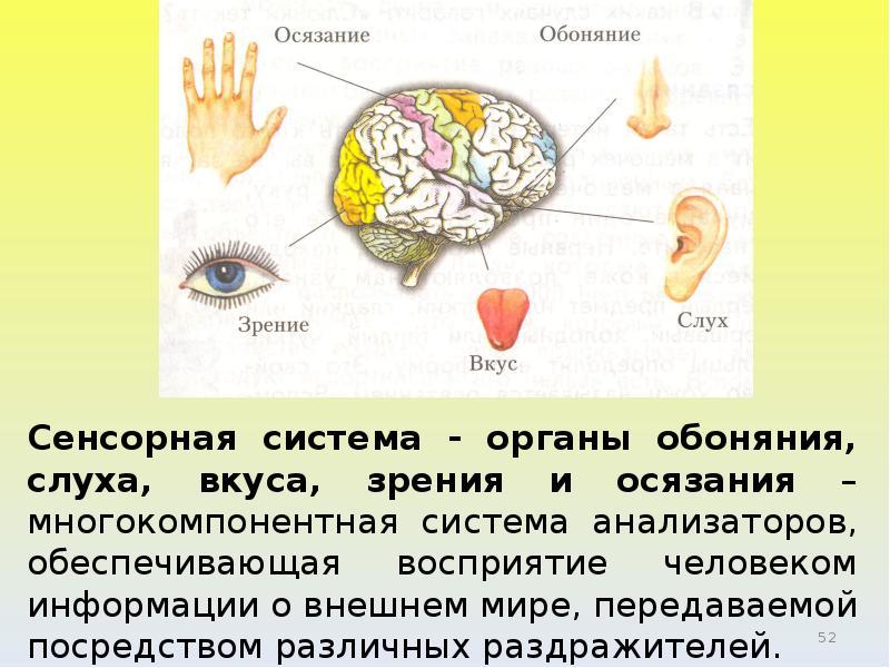 Органы чувств красноухой черепахи: зрение, осязание, обоняние, слух