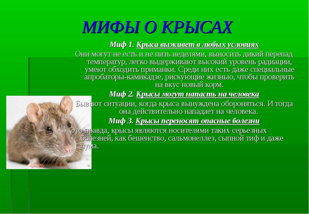 5 мифов о грызунах