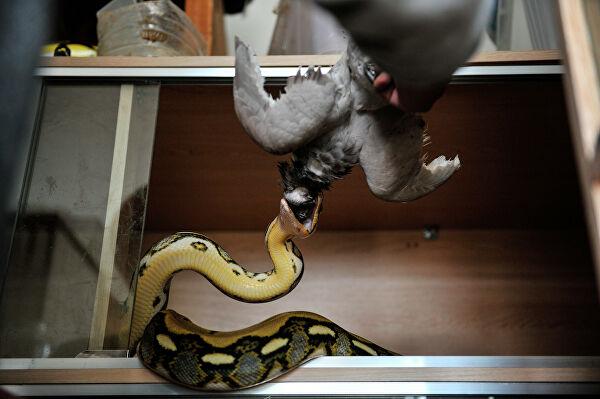 Змеи как домашние питомцы