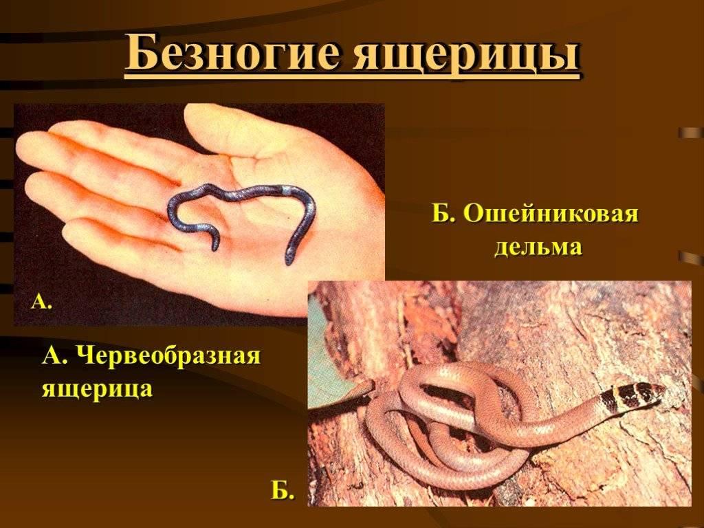 Вирусные болезни рептилий
