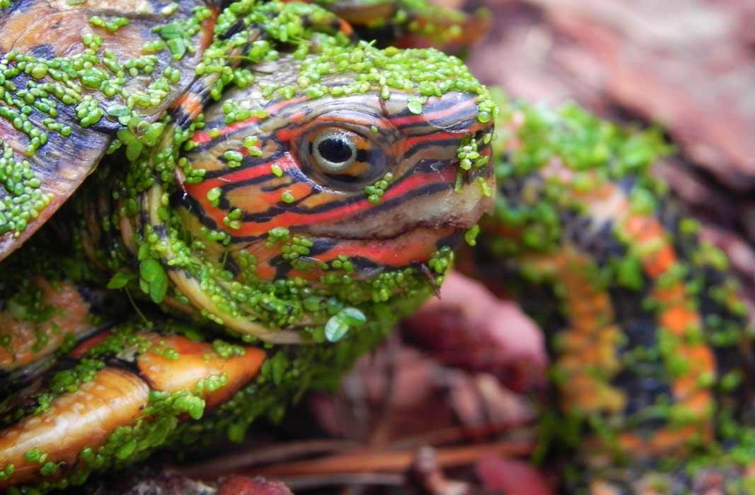Самые необычные черепахи в мире