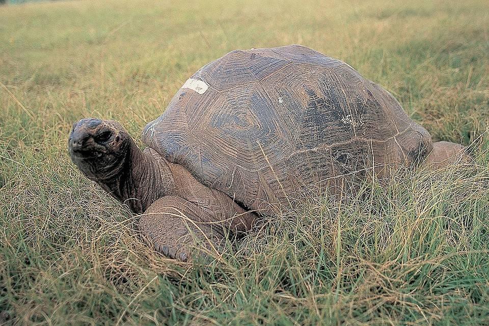 Топ 10 | самые долгоживущие животные