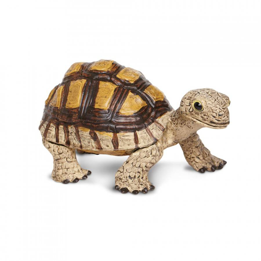 Общие привязки черепахи - common snapping turtle - qwe.wiki