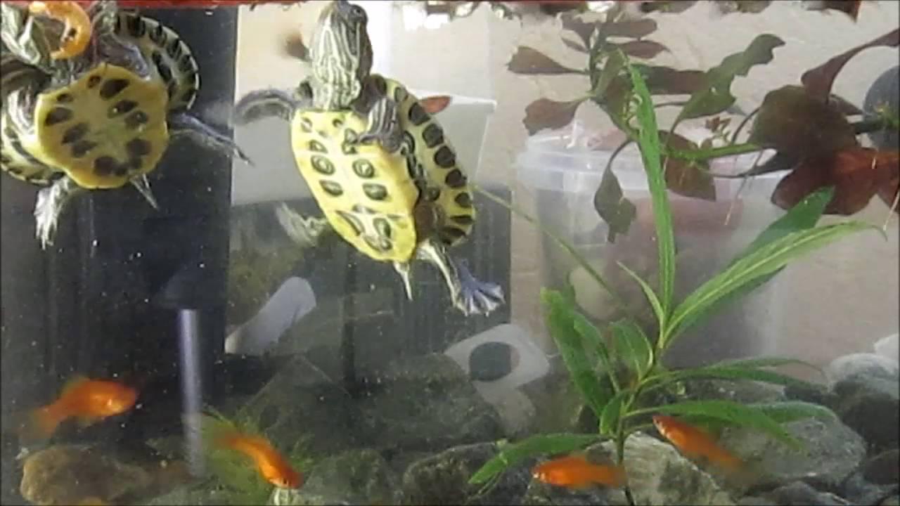 Фильтр в аквариуме должен работать постоянно или нет: можно ли выключать на ночь, в каких случаях и на сколько можно, а также, как часто можно