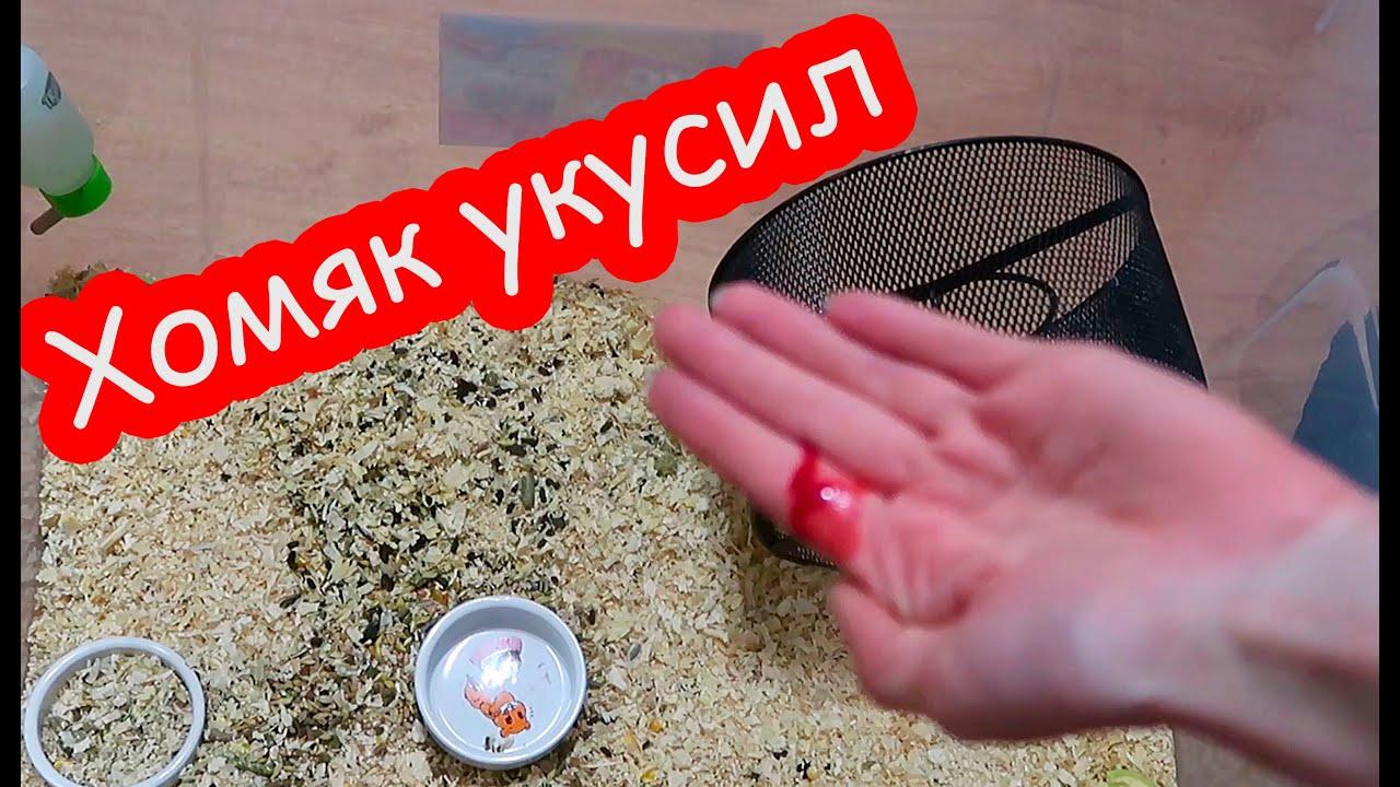 Что делать, если домочадца укусил хомяк