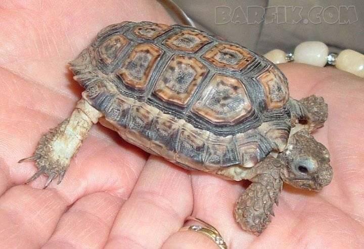 Сколько весит черепаха – самая большая и самая маленькая, размеры и вес наиболее известных видов