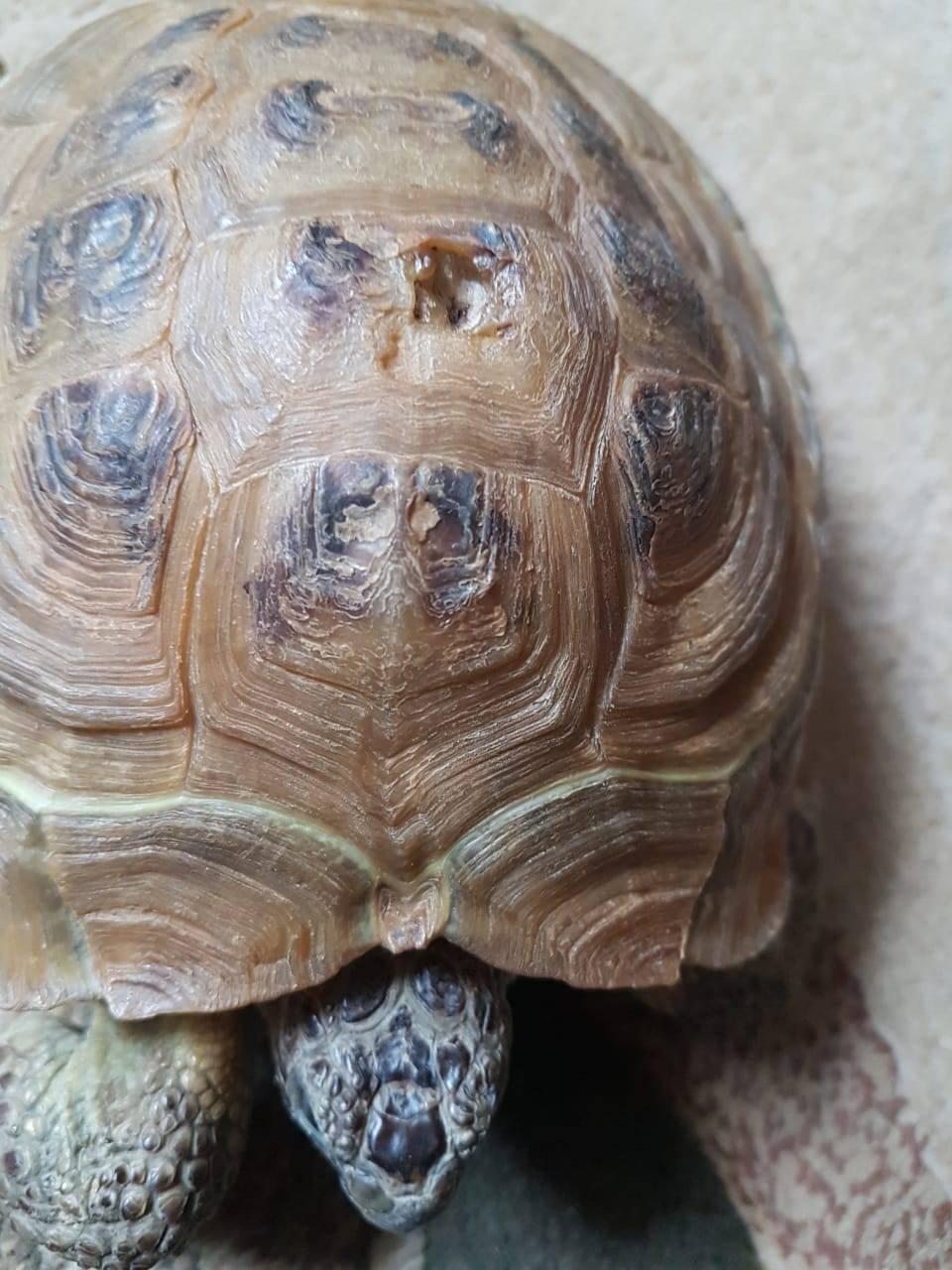 Грибок у красноухой черепахи: симптомы, лечение, фото - живи здорово