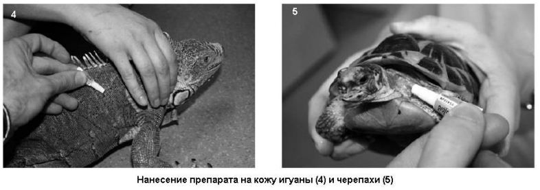 Иммунитет у рептилий