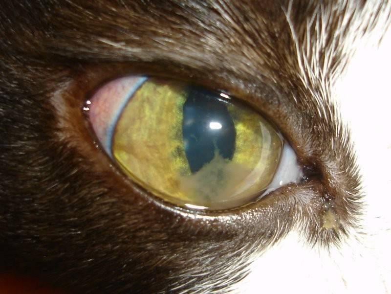 Увеит глаза — что это за заболевание, фото, причины, симптомы и лечение