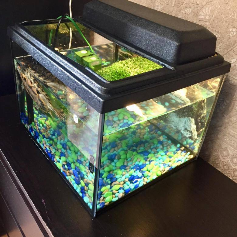 Обустройство и оформление аквариума для красноухой черепахи