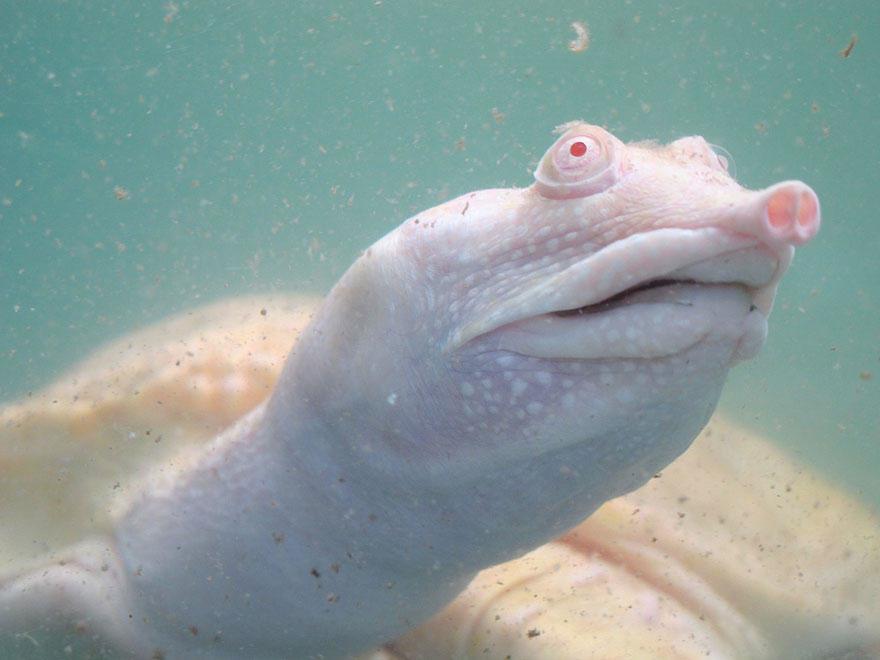 Альбинизм - albinism