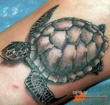 Что символизирует черепаха в жизни человека и для чего она нужна в доме?