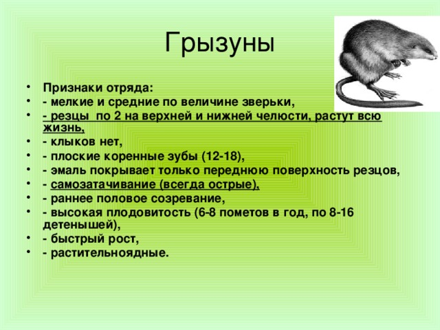 Грызуны в жизни человека. Вред и польза грызунов