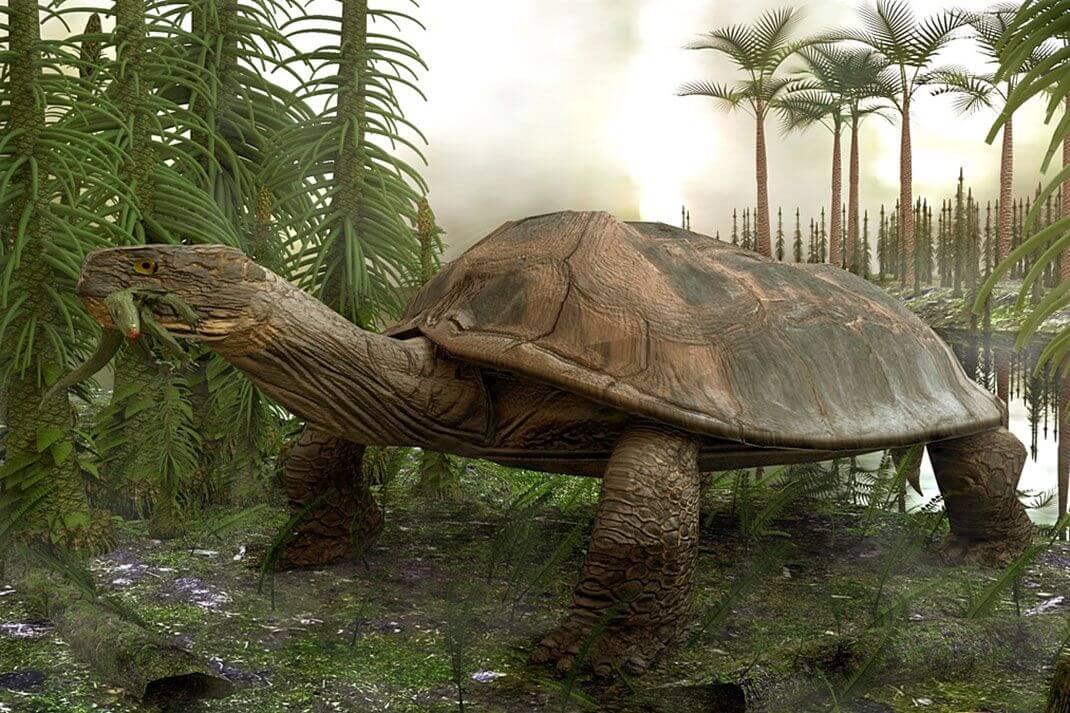 Читать онлайн 100 великих рекордов живой природы страница 41