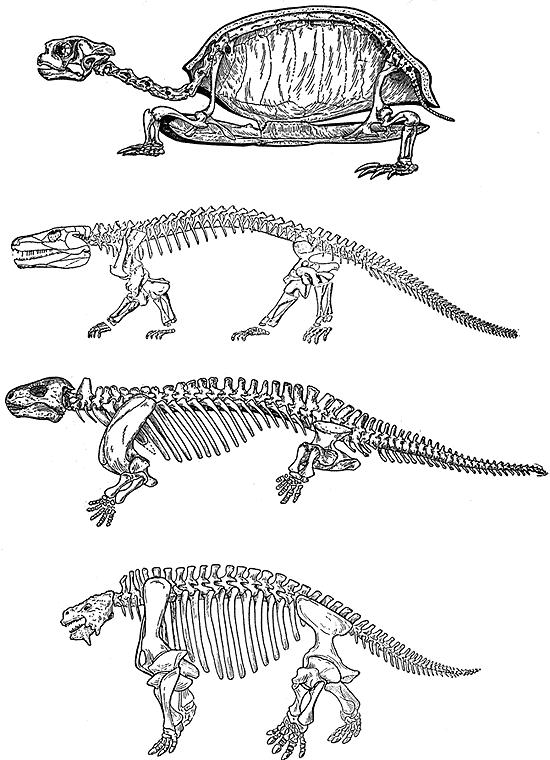 Происхождение и эволюция рептилий