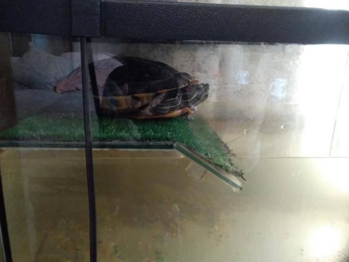 Баланс в аквариуме, как достичь равновесия?