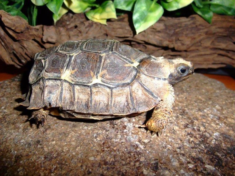 Черепахи (лат. теstudinеs)