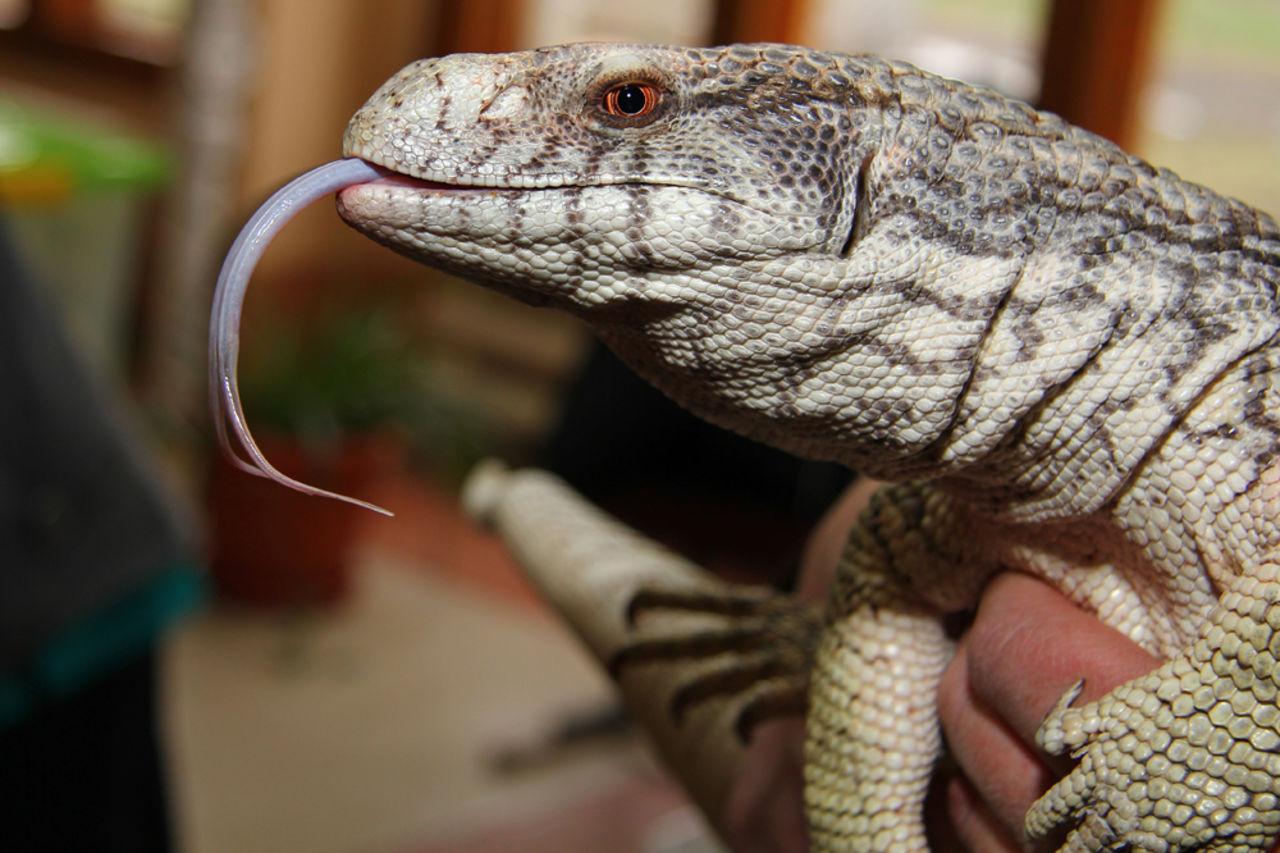 Выставка экзотических животных (мини-зоопарк) «жизнь с холодной кровью» в трк «гранд каньон»
