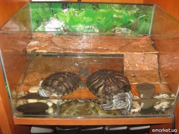 Как перевозить черепаху