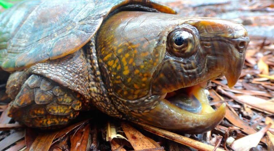Сонник ядовитая черепаха собака. к чему снится ядовитая черепаха собака видеть во сне - сонник дома солнца