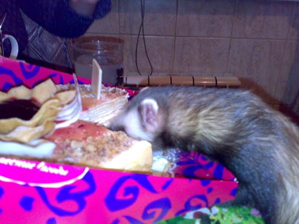 Чем питается хорек – хищный маленький зверек?