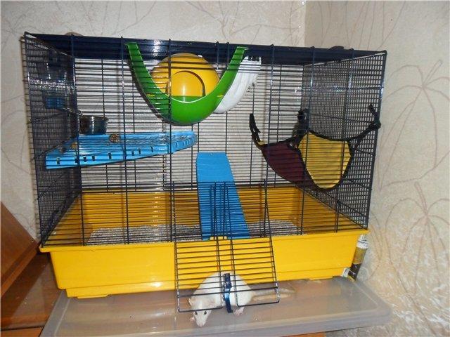 Выбор и обустройство клетки для декоративных мышей