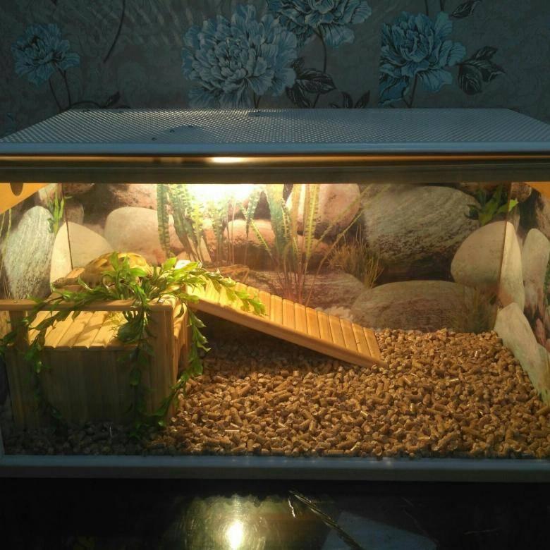 Изготовление террариума для сухопутной черепахи своими руками