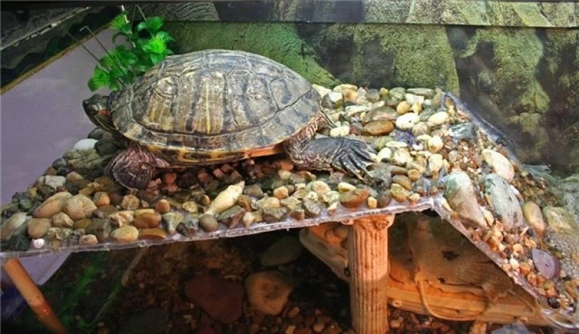 Берег для красноухой черепахи своими руками