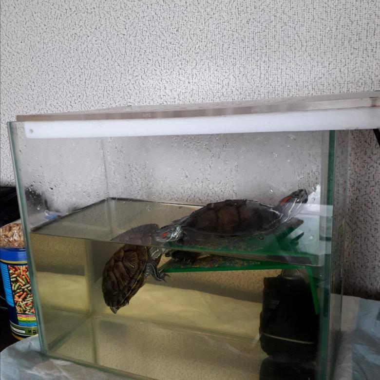 Перевозка черепахи — в помощь путешествующим владельцам