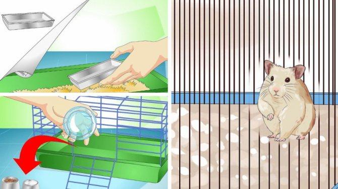 Часто ли нужно чистить клетку хомяка и как это правильно делать?